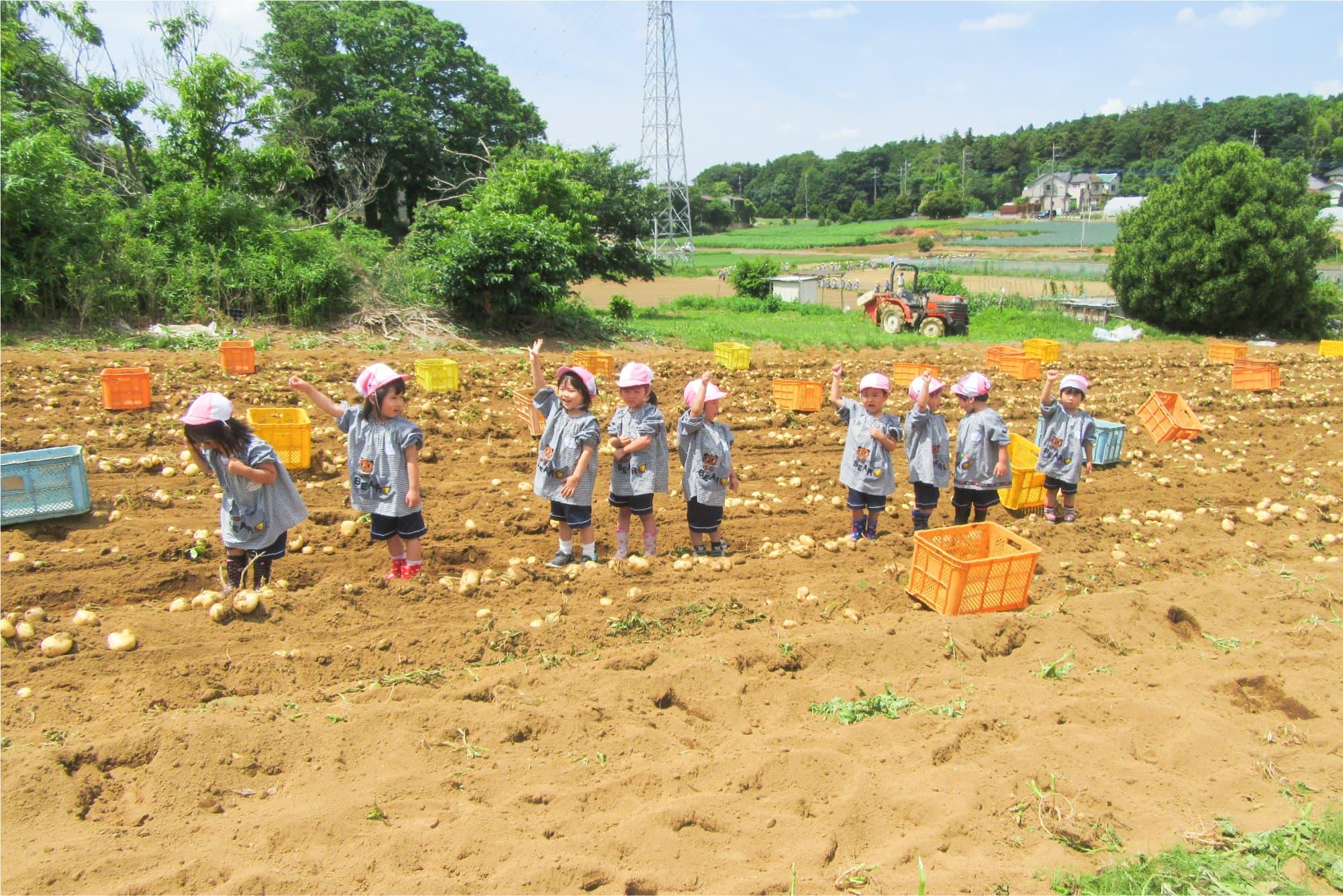 そら豆、ジャガイモ、さつまいも、大根が育つ園専用の畑